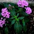 さてこの花の名前は・・・・