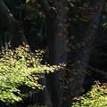 小石川庭園の森