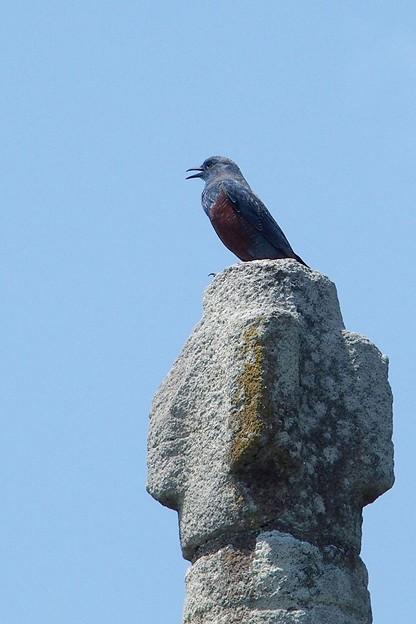 写真: 石塔の天辺で