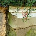 写真: 土塀