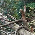写真: 森の生き物1