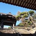 写真: 仁王門から