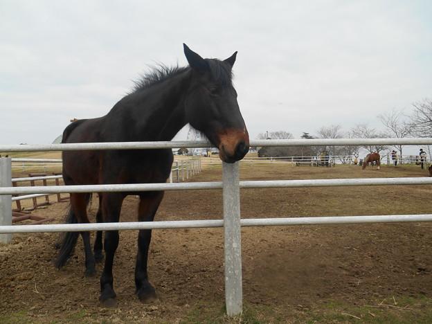 写真: 馬