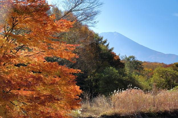 写真: 富士と紅葉2