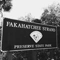 Fakahachee Strand 3-25-17
