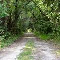 Trail 3-25-17