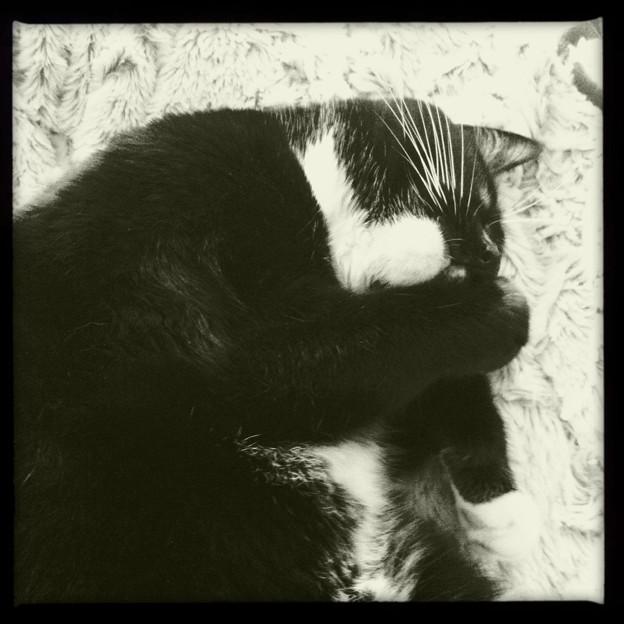 Cat Nap II 4-8-17