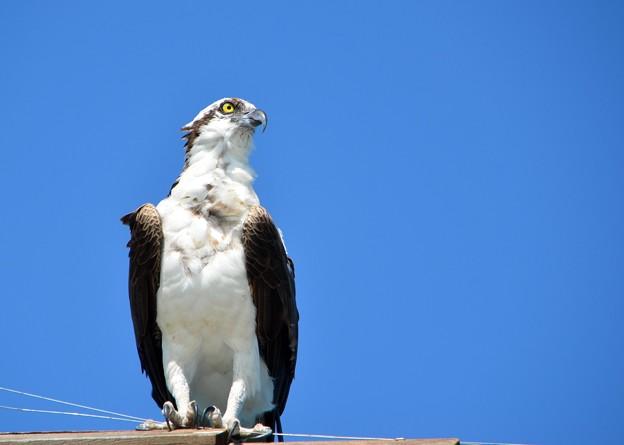 Photos: Osprey II 4-15-17