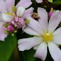 Rose Cactus I 4-18-17