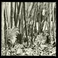 Photos: By the Bamboo Woods I 4-18-17