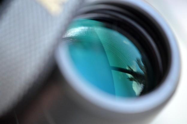 (ものコンおまけ)Palm Tree Lens