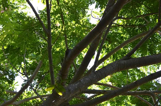 このー木なんの木気になる気になる