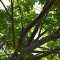 写真: このー木なんの木気になる気になる