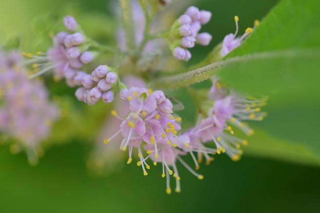 Beatyberry I 7-15-17