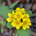 写真: Yellow Flowers 7-15-17