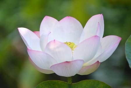 Lotus III 8-6-17