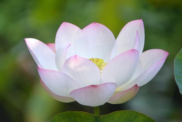 写真: Lotus III 8-6-17