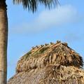 写真: 生きてる屋根