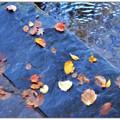 写真: Collage 10-14-17