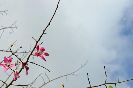 Silk Floss Tree I 10-1-17