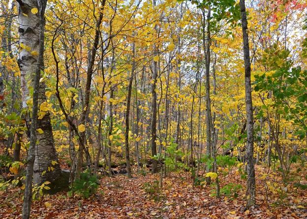 Photos: Autumn in the Valley 10-16-17