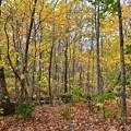 写真: Autumn in the Valley 10-16-17
