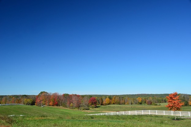 Fall Colors in Pineland 10-17-17