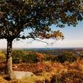 写真: Blueberry Hill 10-19-17