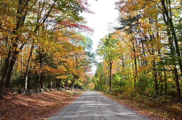 Photos: Kimball Pond Road Vienna Maine 10-19-17