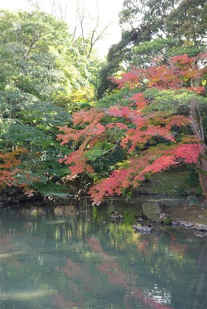 紅葉の岡山後楽園