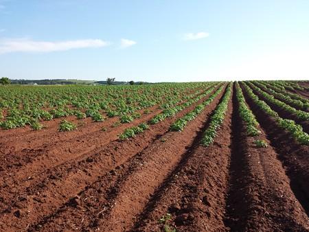 potato-1628500_1920