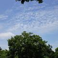 写真: 夏の風を感じて・・・
