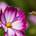 写真: 花畑には自由がいっぱい