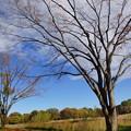 写真: 雲で枯れ木に花を咲かせてみました
