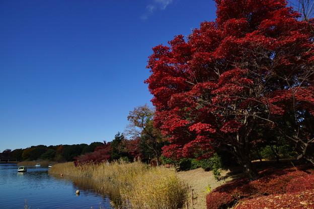 赤と青に冬の訪れを見る