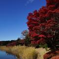 写真: 赤と青に冬の訪れを見る
