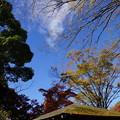 写真: 枯れ葉散る屋根を眺めて一首