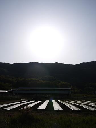 朝日と畑@ビーグルがいる南箱根の景色