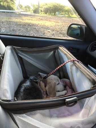 車ではいつも寝てます