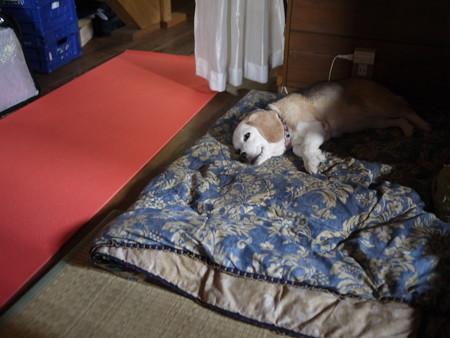 おかーさんのパソコンの側でいつも寝るお姫様