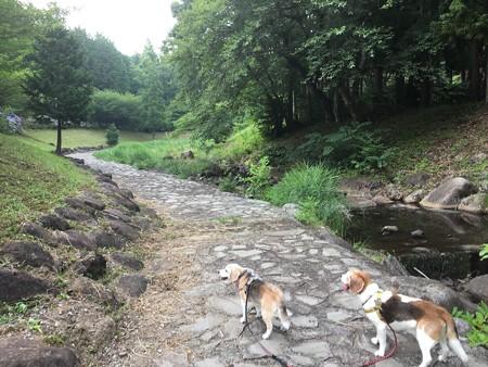 森の公園にて、岩にこもってる地熱がまだ熱かった
