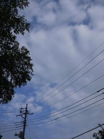 電線も角度によっては被写体になる