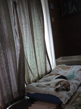 日中はこうしてぐーぐー寝てます