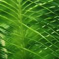 写真: leaf