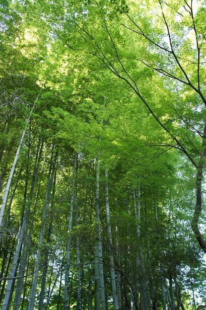 三島市立公園 楽寿園02