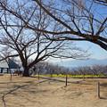 二宮町吾妻山公園42
