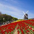 写真: オランダの風