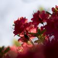 写真: 茜色の輝き