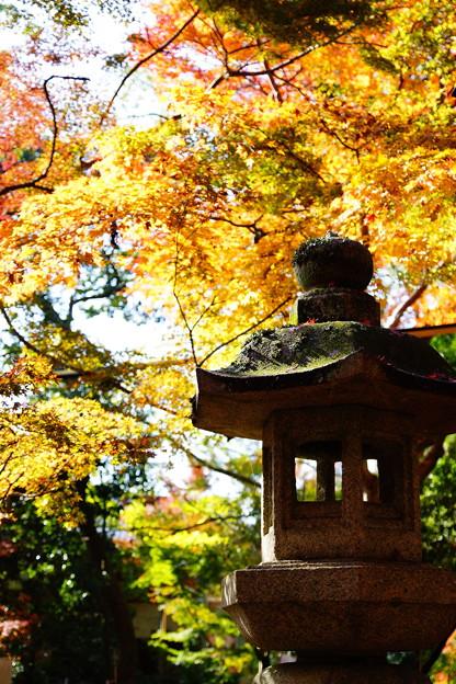 Photos: 秋色灯篭