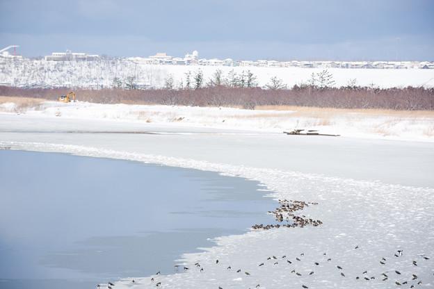凍った河北潟